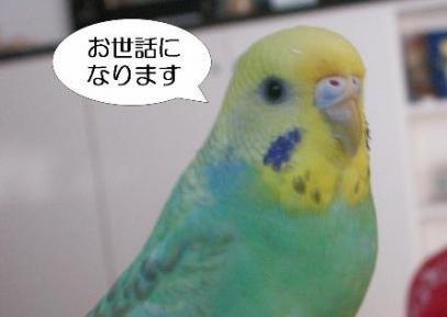 koumechan222.jpg