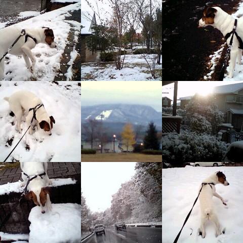 collage1-1.jpg