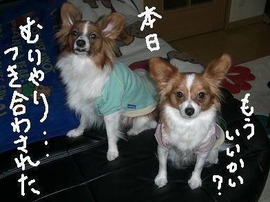 fukusuke.jpg