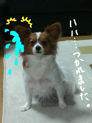 mimi7.jpg