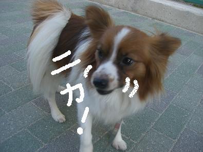 nibosi09.jpg