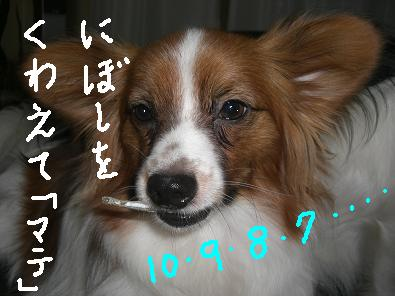 nibosi1.jpg