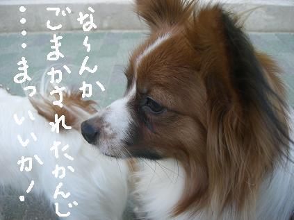 nibosi88.jpg
