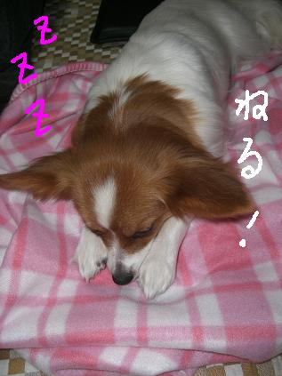 sanpo5.jpg