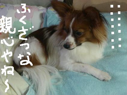 yori1.jpg