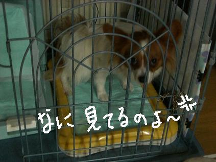 yori2.jpg