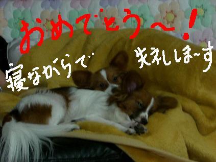 yori4.jpg