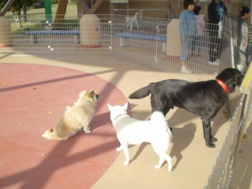 和歌山県動物愛護センター5