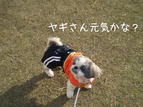 和歌山県動物愛護センター7