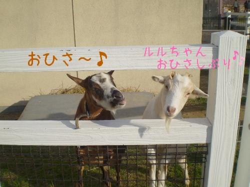 和歌山県動物愛護センター8