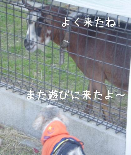 和歌山県動物愛護センター9