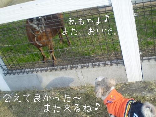 和歌山県動物愛護センター10