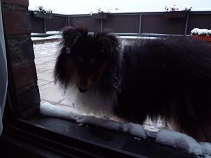 雪付いてますよ。2010.11.30