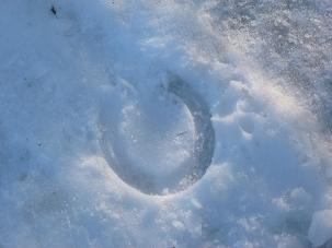 雪上馬蹄2010.12.30