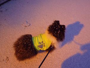 雪だよ2011.1.31