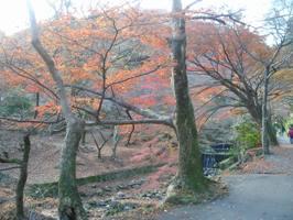 養老公園の紅葉