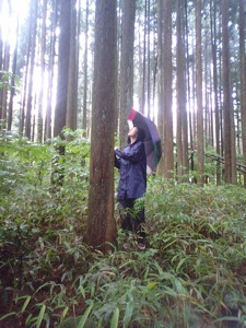 6木の声をきく2