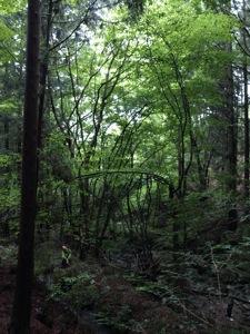 15森を見上け#12441;る人