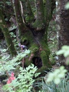 17裏は木の顔