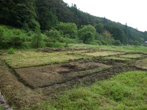 1草を刈る2011田植え