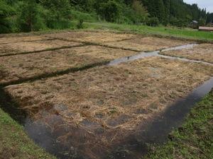 13水を張る2011田植え