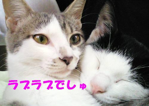091104_4.jpg