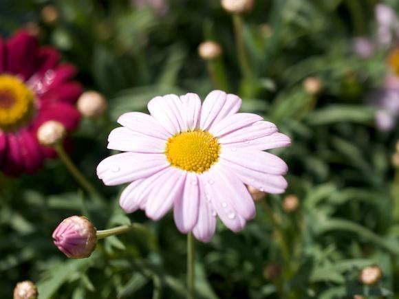 a12flower12.jpg