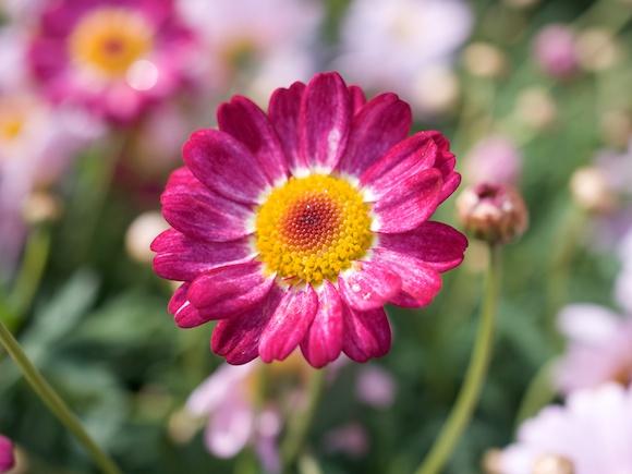 a12flower13.jpg