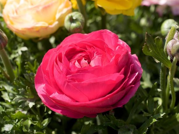 a12flower14.jpg