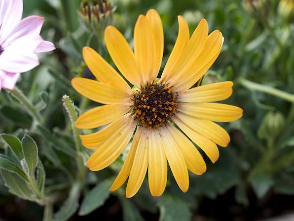 a12flower15.jpg