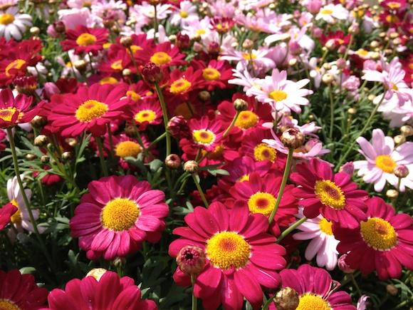 a12flower18.jpg