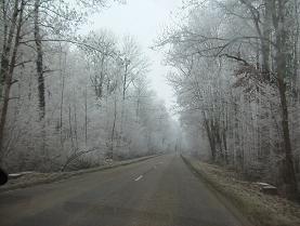 アルザスの白い森