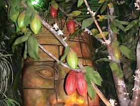 カカオの木の展示