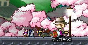 Maple6363a.jpg