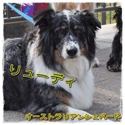 11_20110406225537.jpg