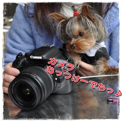 17_20110407230505.jpg