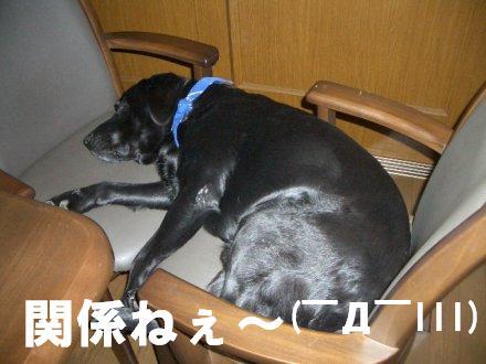 CIMG2442_7.jpg