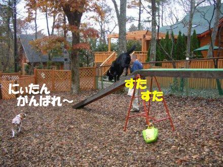 CIMG2754_8.jpg