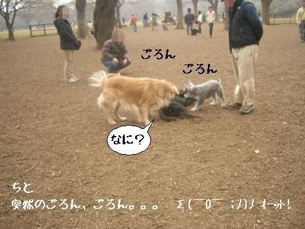 CIMG4136_4.jpg