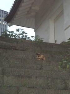 chiyodaku81.jpg