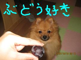 IMG_2913-2.jpg