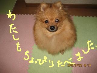IMG_3175-2.jpg