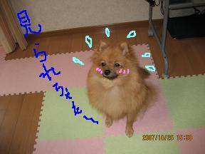IMG_3200-2.jpg