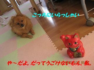IMG_4303.jpg
