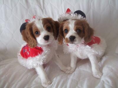 5 クリスマス