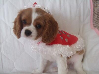 3 クリスマス