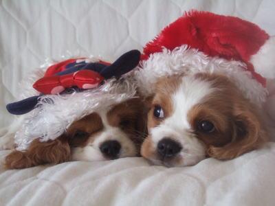 14 クリスマス