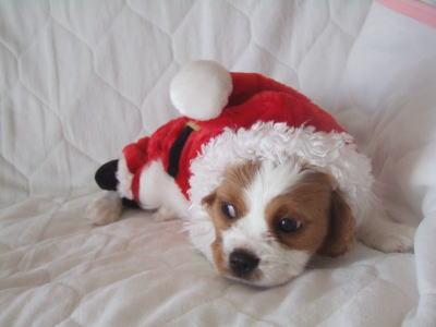 13 クリスマス
