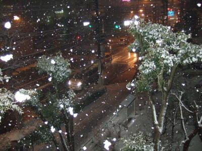 2011.2.14 雪 1