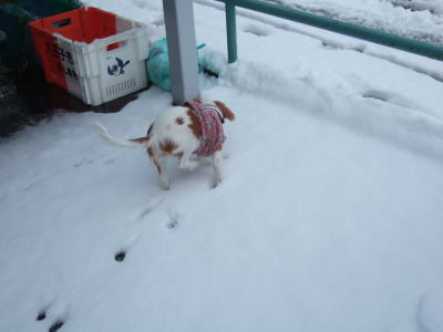 2011.2.14 雪 11